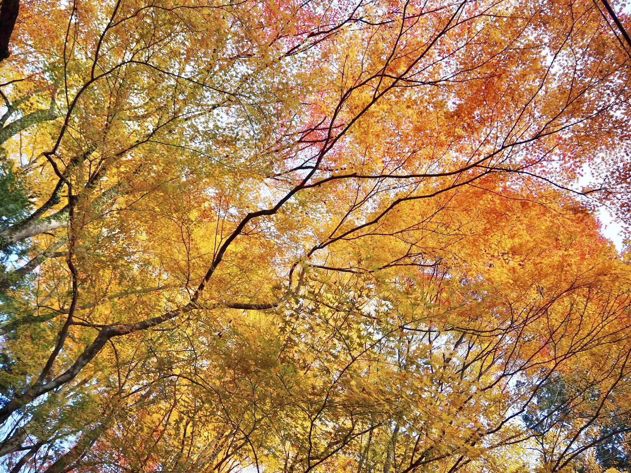img 7473 - 香嵐渓 - 日本の秋を感じる 愛知県豊田市の紅葉スポット