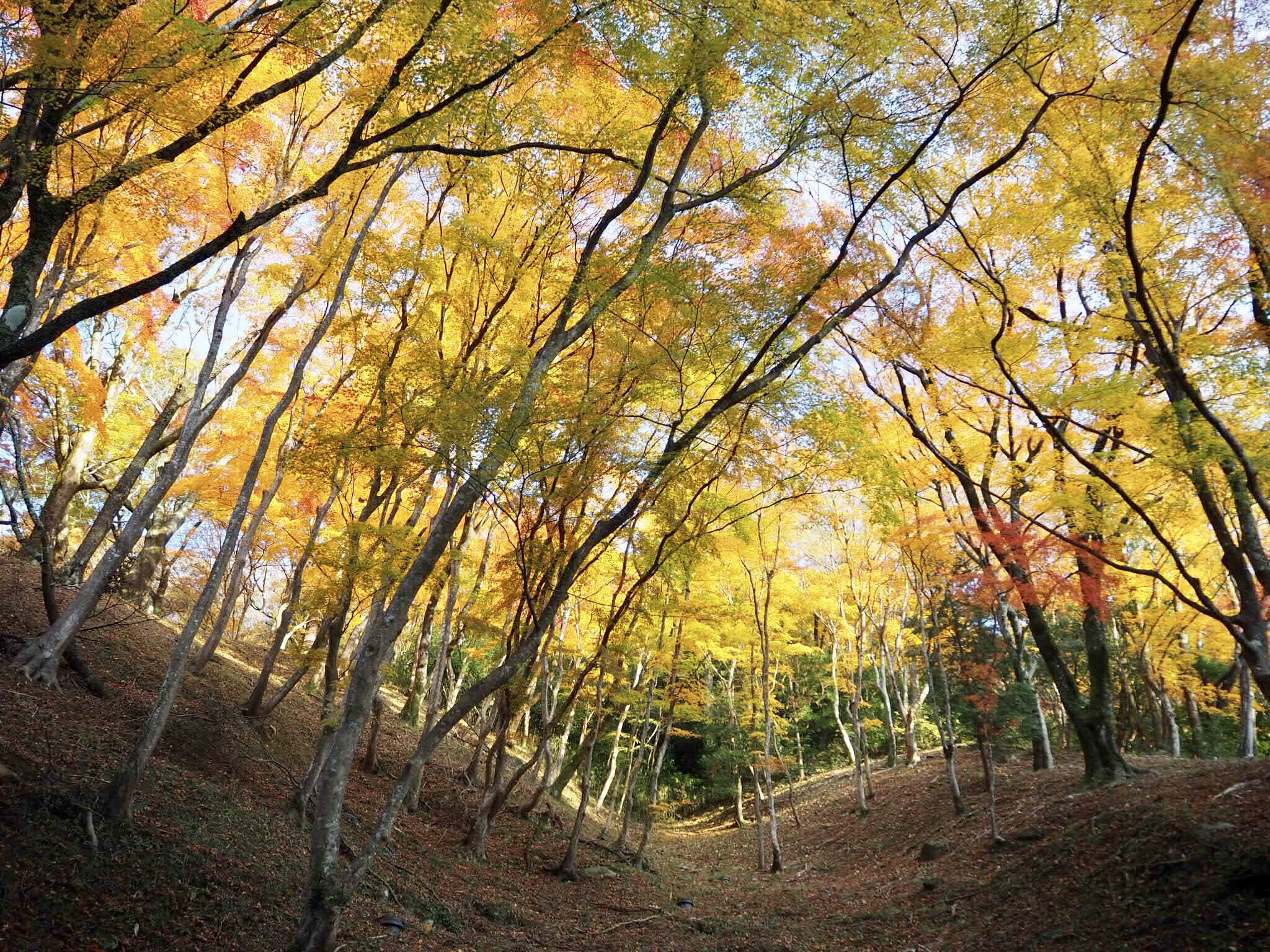 img 7477 - 香嵐渓 - 日本の秋を感じる 愛知県豊田市の紅葉スポット