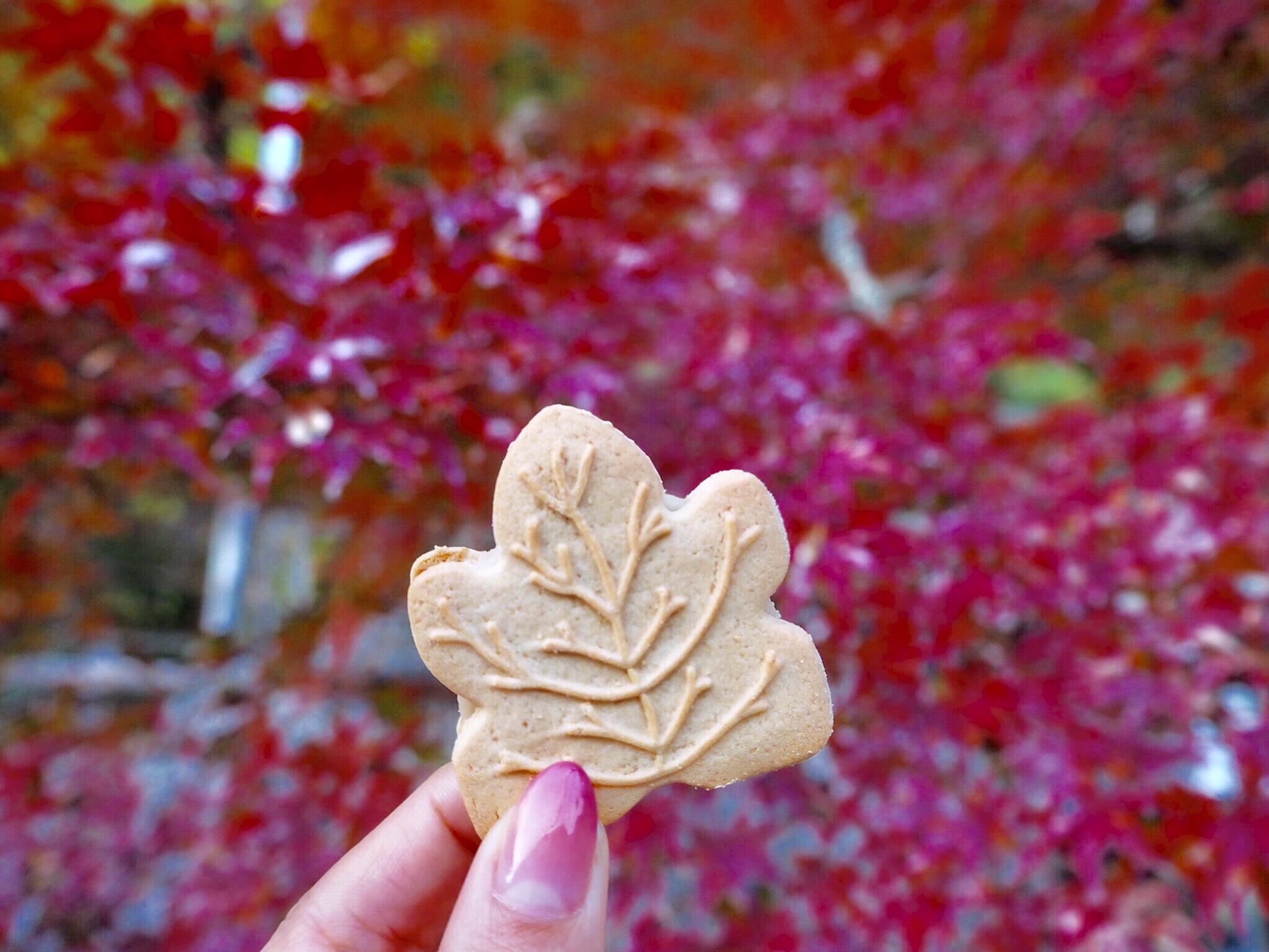 img 7541 - 香嵐渓 - 日本の秋を感じる 愛知県豊田市の紅葉スポット