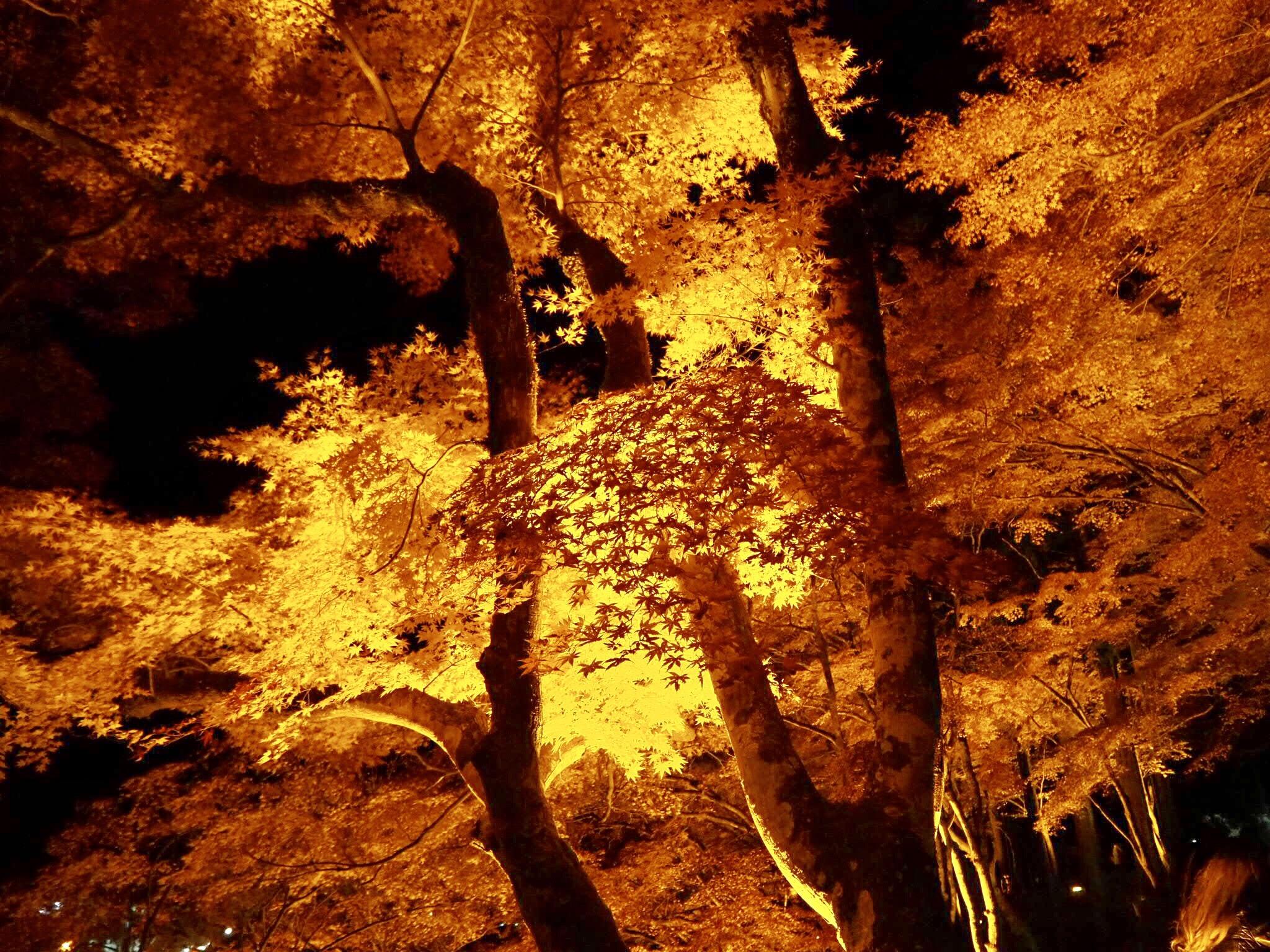 img 7568 - 香嵐渓 - 日本の秋を感じる 愛知県豊田市の紅葉スポット